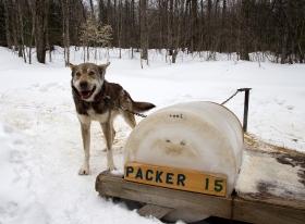 Packer