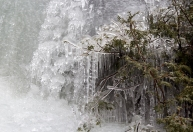 Ice coated branched