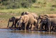 Elephants cooling off at the water hole