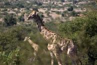 My favorite safari animal