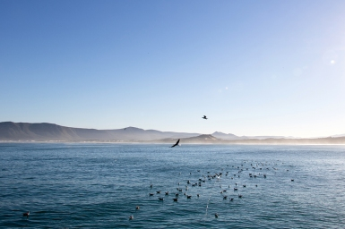 Seabirds following our boat