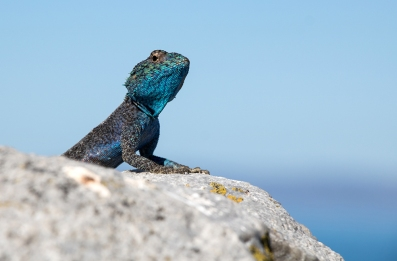 Southern Rock Agama