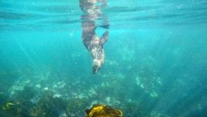 A seal near Duiker Island