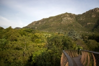 The Kirstenbosch Tree Canopy Walk
