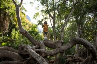 Caleb in a tree