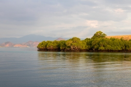 Mangroves on our way back to Labuan Bajo