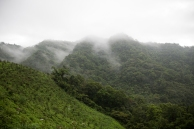 Foggy hill in the Pinglin District