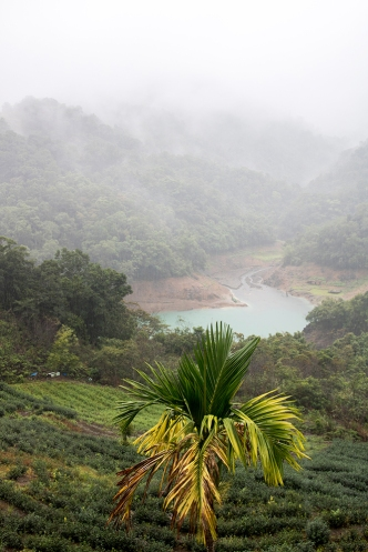 Thousand Island Lake and Pinglin Tea Plantation