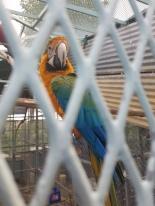 A parrot at the Fajardo Inn