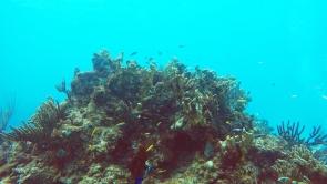 Some hard corals at Cayo Diablo