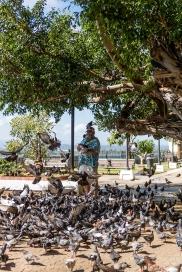 Pigeons in Old San Juan
