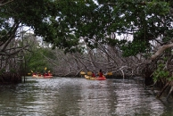 Kayakers on the mangrove trail