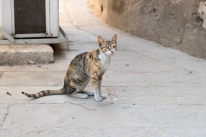 A cat in the Citadel of Saladin