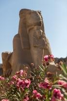 The best-preserved sphinx in Karnak