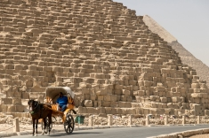 A carraige driver in front of the Great Pyramid