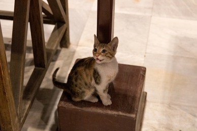 A kitten in the Egytian Museum
